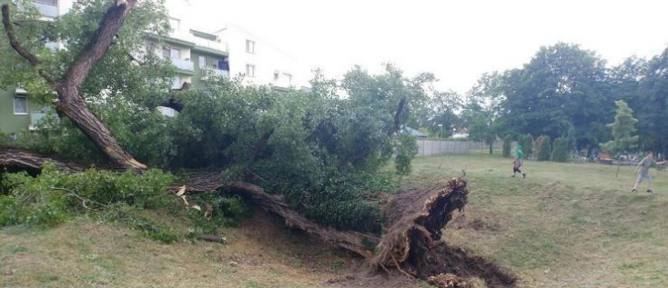 Háromszáz éves fa dőlt egy vadonatúj személyautóra Somorján