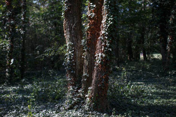 BORZALOM: Egy férfi holttestét találták meg az erdőben