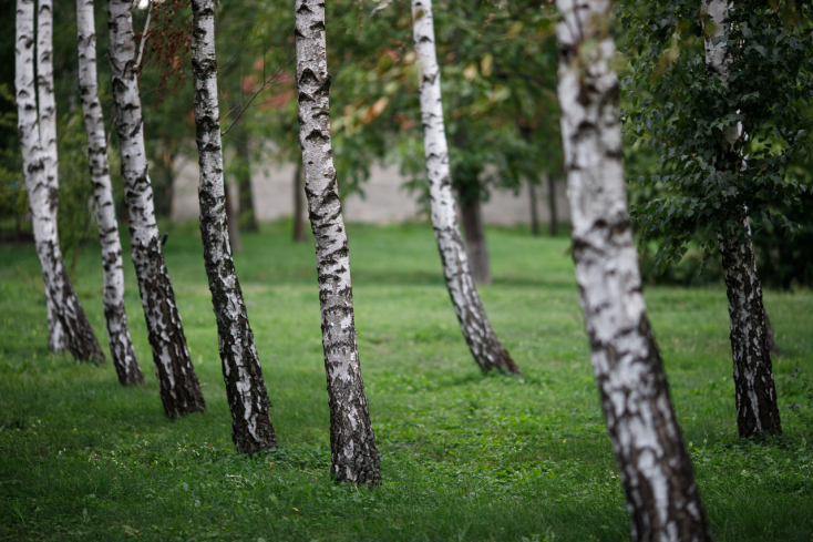Fák ültetésével életek százait lehetne megmenteni Philadelphiában