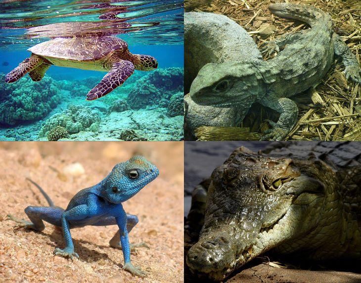 A vadon élő gerinces fajok populációi átlagosan kétharmaddal zsugorodtak 1970 óta