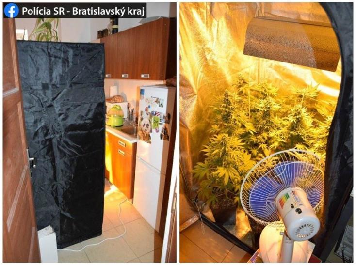Kész kertészetet üzemeltetett lakásán egy fickó – zöldség helyett azonban valami egészen más volt a cserepekben (FOTÓ)