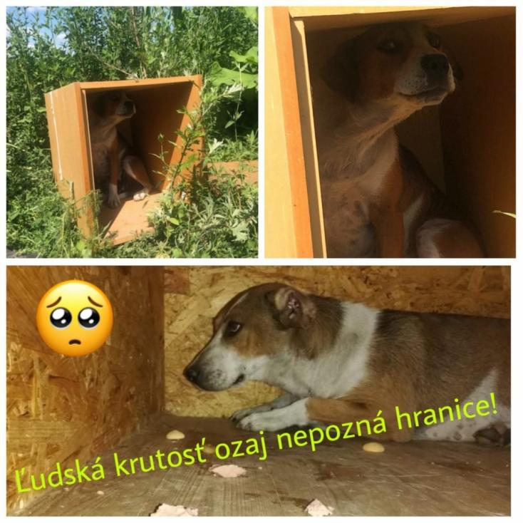 Reszkető kutyust találtak egy dobozban a Slovakia Ring közelében