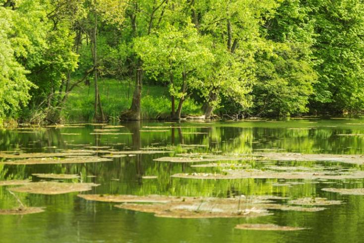 A tőkési Duna-ág