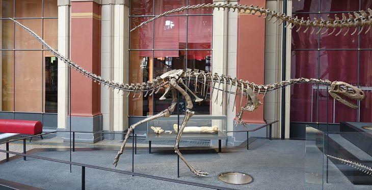 Fogatlan dinoszaurusz fosszíliáját azonosították Ausztráliában