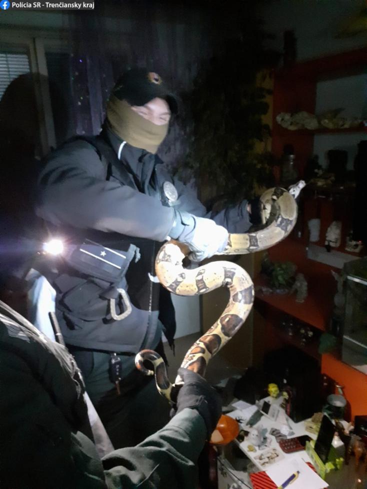 Két és fél méteres kígyót fogtak be a rendőrök egy lakásban