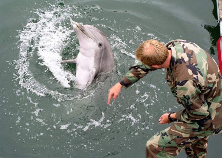 Elpusztultak az ukránok harci célokra kiképzett delfinjei