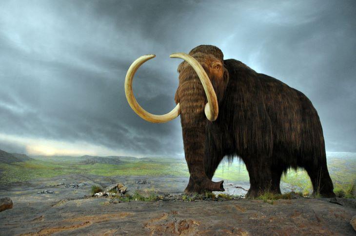 Jó állapotban megmaradt mamutcsontvázat találtak egy szibériai tóban