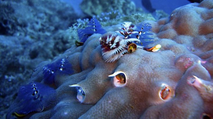 Az összes szervét regenerálni képes tengeri állatot azonosítottak kutatók