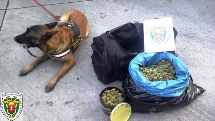Egy pitbullal terelte volna el a rendőrkutya figyelmét a marihuánáról, nem jött össze