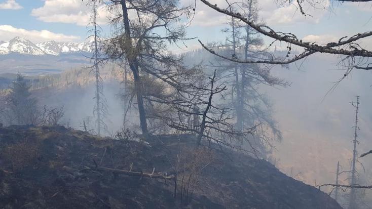 Erdőtűzzel küzd több mint száz tűzoltó, közel 10 hektáros területen lángol az erdő! (FOTÓK)