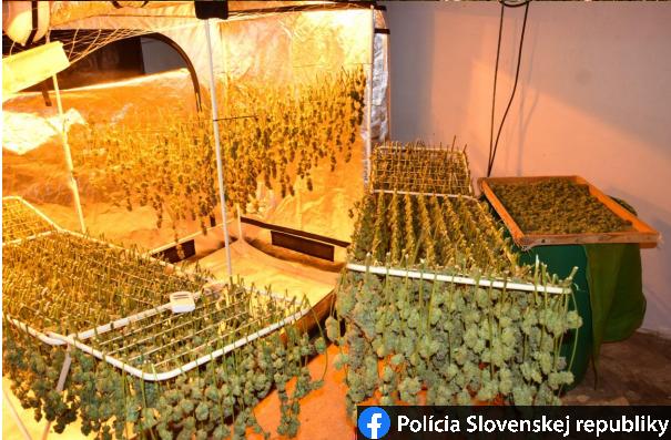 Nagyban nyomták a marihuánatermesztők, droglabort számolt fel a NAKA (FOTÓK)