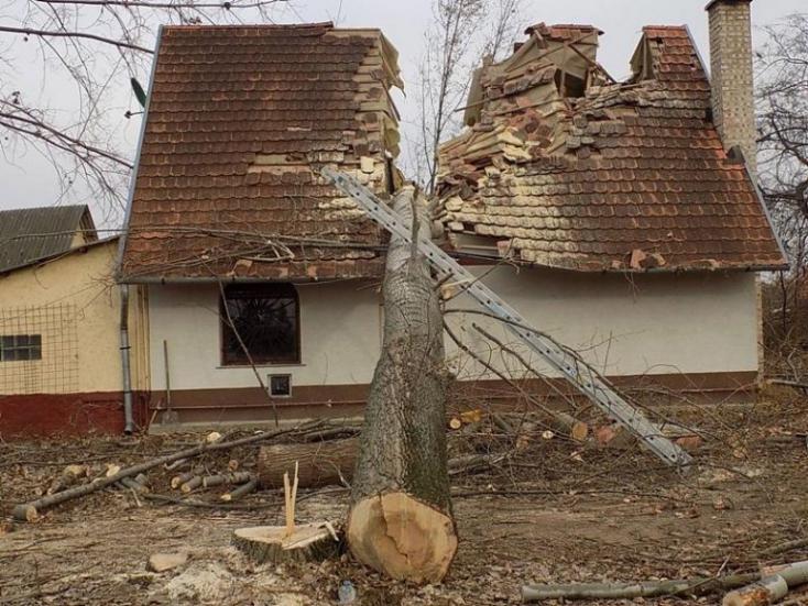 30 méteres fa vágott ketté egy családi házat (FOTÓK)