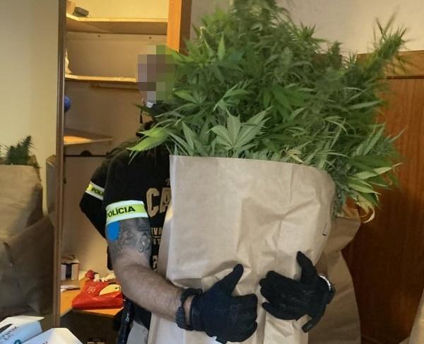 Marihuánakertet üzemeltetett egy ikerpár - a lakás minden zugában volt a növényből (FOTÓK)