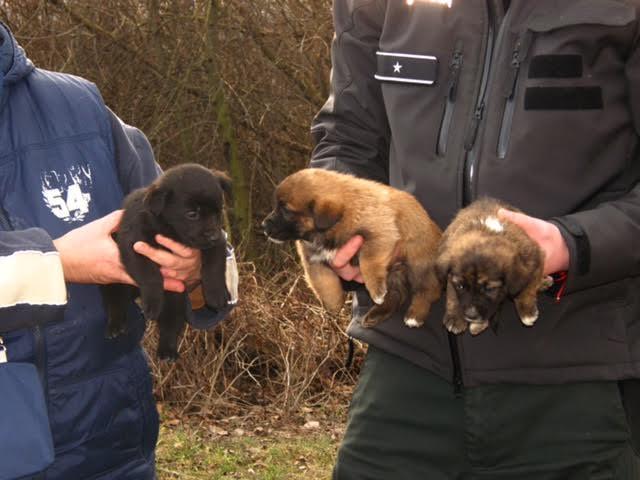 Magukra hagyták ezeket az édes kiskutyákat a bősi erdőnél (FOTÓK)