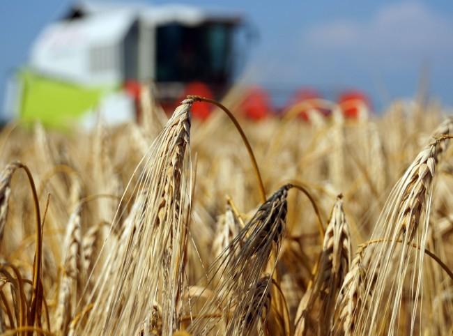 A szlovák mezőgazdaság nyereséggel zárta a múlt évet