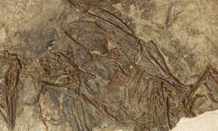 """Az eddig véltnél több millió évvel korábban kezdődött meg a madarak """"felemelkedése"""""""