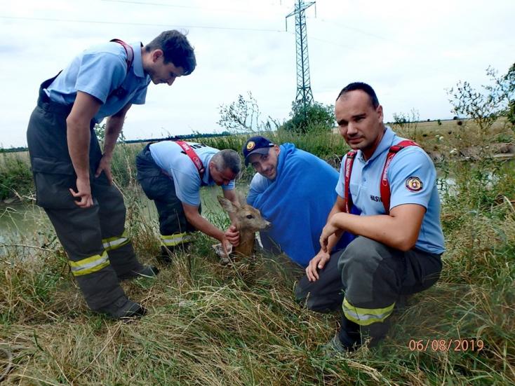 Kanálisban fuldokló őzet mentettek a somorjai tűzoltók (FOTÓK)