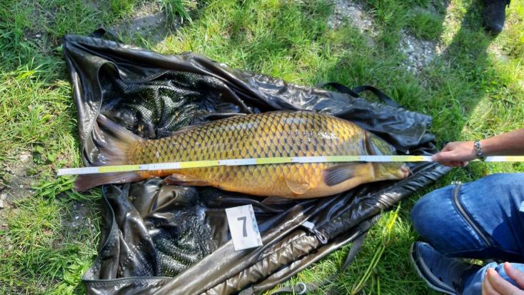 Harcsák és ponty a szákban – orvhalászokra csaptak le a Dunaszerdahelyi járásban