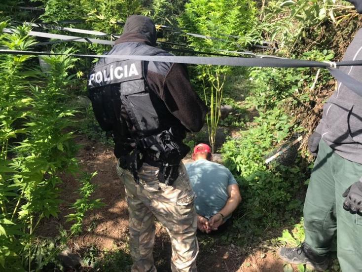 Rendőrségi akció: a kertjében fogták el a marihuánatermesztőt (FOTÓK)