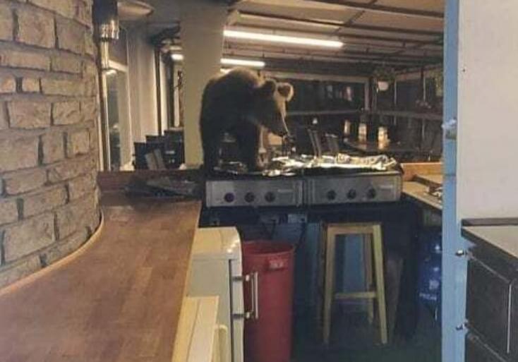 Váratlan látogató: medve hatolt be egy szlovákiai hotelbe