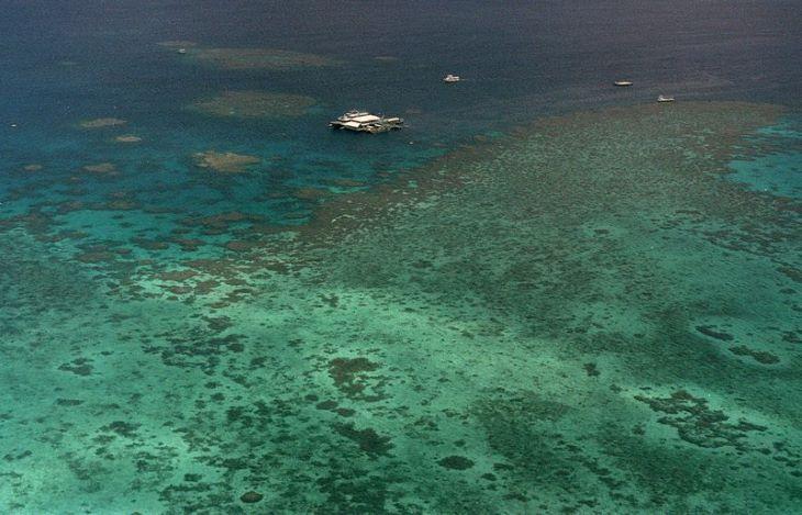 Korallpopulációjának felét elveszítette az ausztrál Nagy-korallzátony az 1990-es évek óta