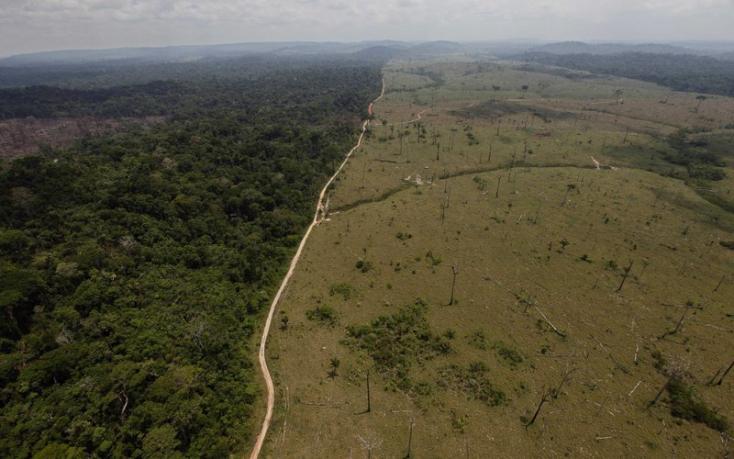Idén csaknem kétszer annyi esőerdő pusztult el Brazíliában, mint tavaly