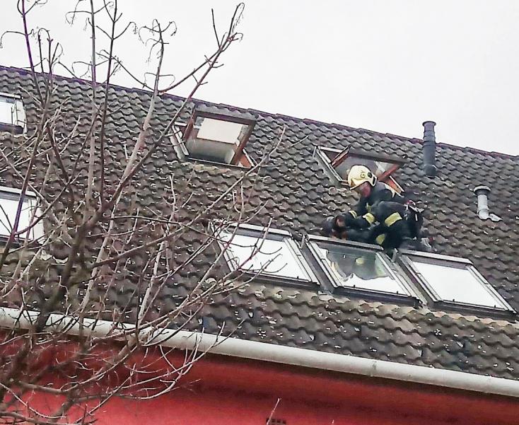 Ablakon keresztül a tetőre mászott egy tacskó Győrben, a tűzoltók mentették meg