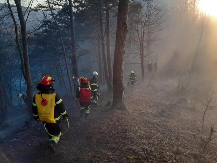 Emberpróbáló területen lángolt az erdő – több mint 50 tűzoltó küzdött a tűzzel (FOTÓK)