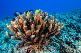 3D-s korallzátonyokat nyomtatott egy svájci kutató