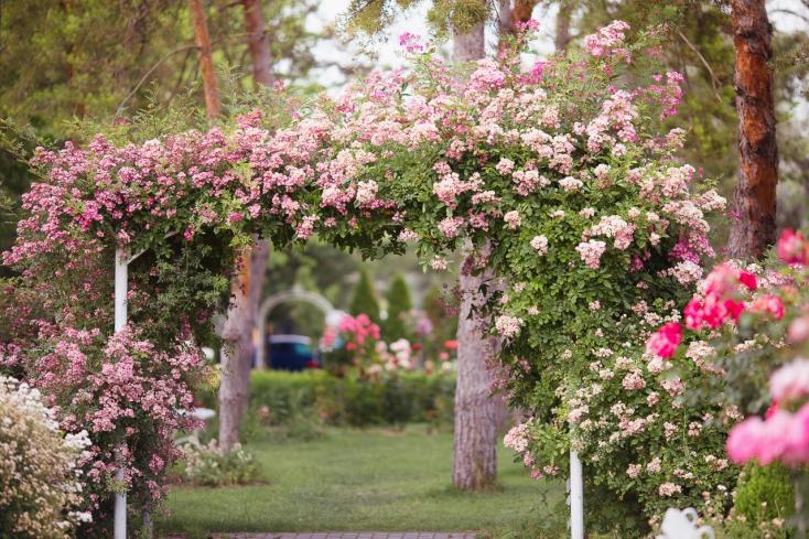 Tegyen egy virtuális sétát a dunaszerdahelyi rózsaparkban!