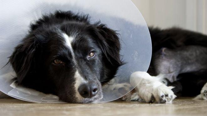 Táppénzt kap egy olasz nő, hogy gondozhassa beteg kutyáját