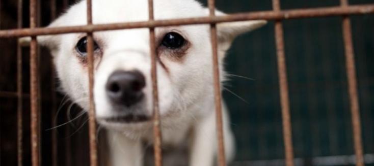 Évente mintegy 10 millió állatot használnak fel kutatási célra az Európai Unióban