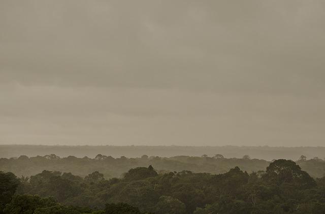 Megháromszorozódott a kiirtott erdőterület az Amazonas vidékén