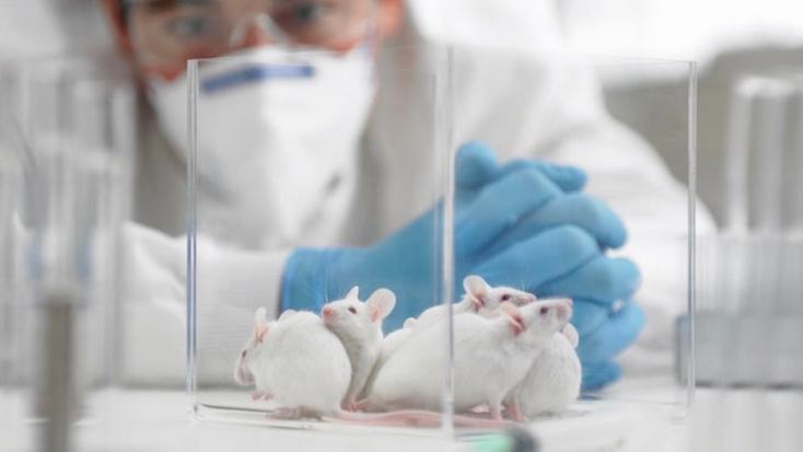 Évente mintegy 10 millió állatot használnakállatkísérletekreaz Európai Unióban