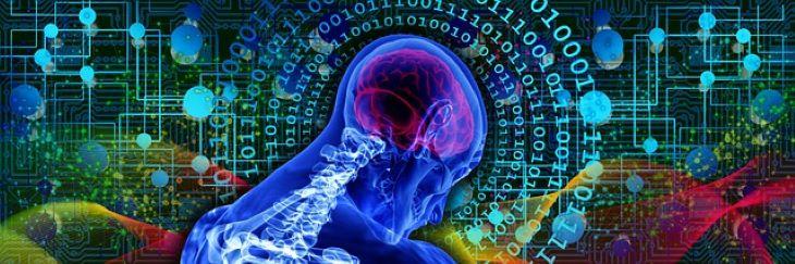 Szegedi kutatók új eredményeket értek el a mesterségesintelligencia-alapú biológiai képelemzés területén