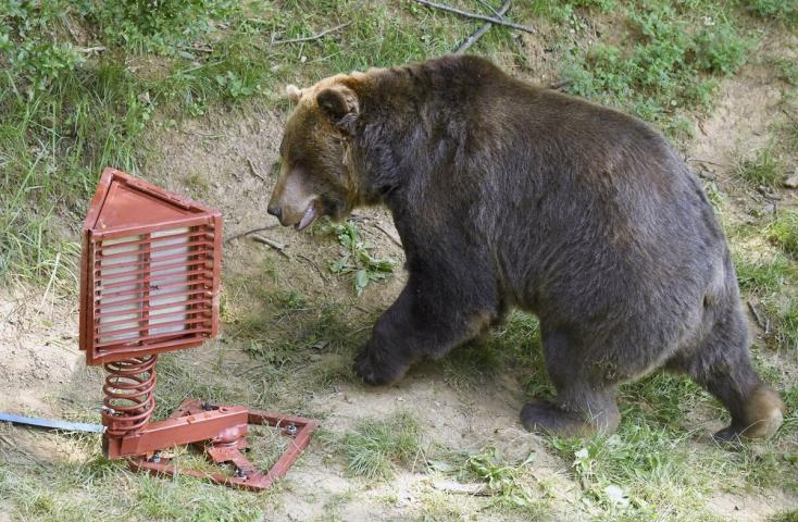 Kilövési engedélyt kértek a medvékre, de a miniszter megtagadta