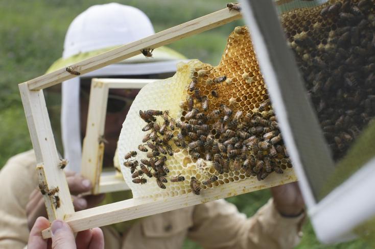 Evett ma mézet? 75 %-os a valószínűsége, hogy az rovarirtóval volt szennyezett