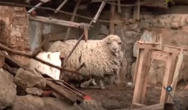 Embertelen körülmények közt tartott háziállatokat egy idős asszony