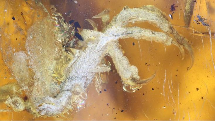 LENYŰGÖZŐ: 100 millió éves madárfiókát őrzött meg a borostyán