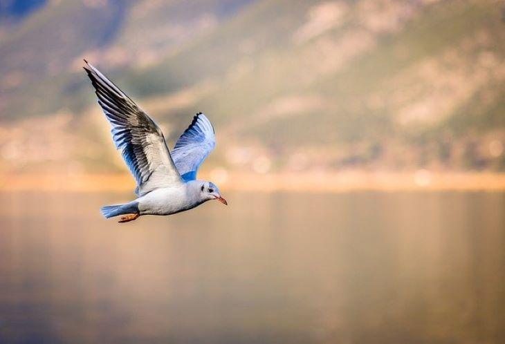 Több mint 50 milliárd madár él a világon