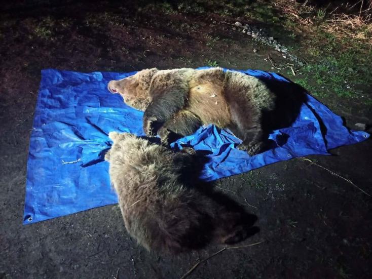 Lelőttek egy medvebocsot az anyjával együttaz egyik tátrai hegyi szállónál