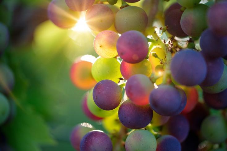 Már a borok is jelzik a klímaváltozást!