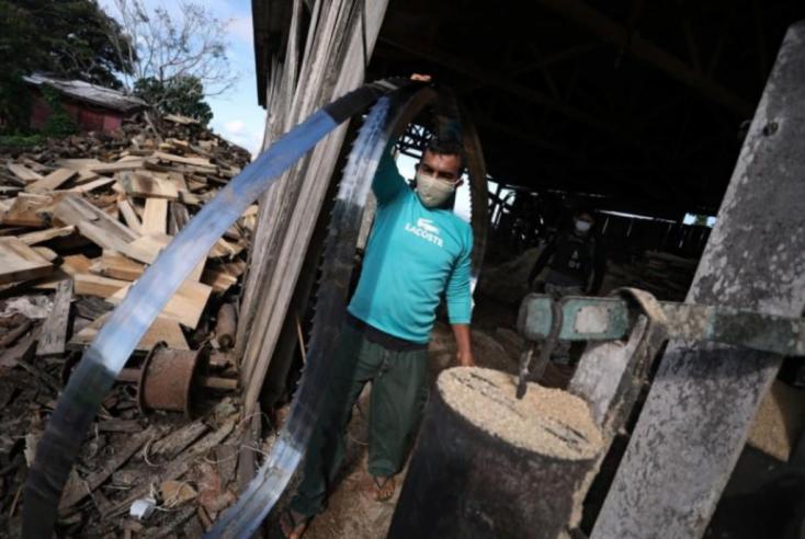 Illegális fakereskedelem miatt razziázott arendőrség Brazíliában, 30 embert őrizetbe vettek