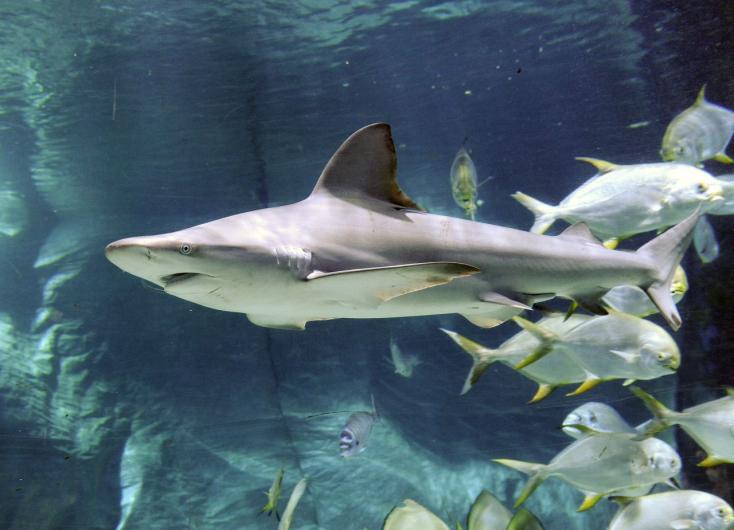 Két új cápa érkezett a budapesti Tropicariumba