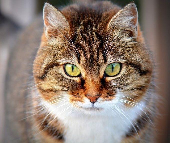 A macskák nyugodtabbá válnak egy autista gyermeket nevelő családban