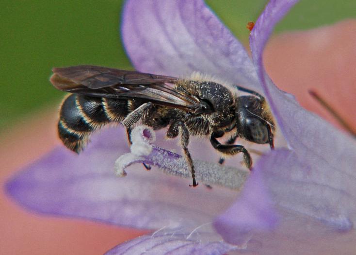 Méheket öl a klímaváltozás!
