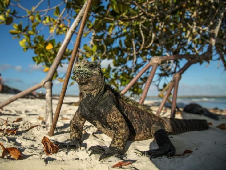 Huszonkét tonna szemetet gyűjtöttek a Galápagos-szigetek partjainál