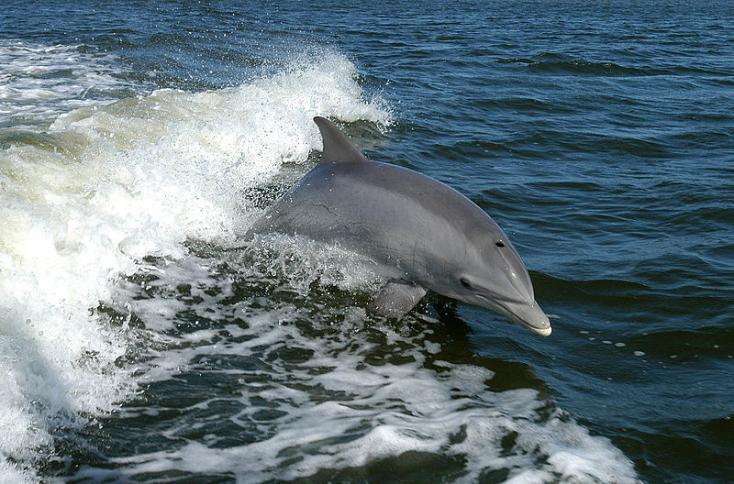 Rengetegelpusztult delfintmosottpartra a tenger Görögországban