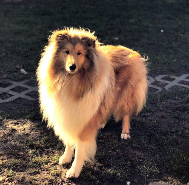 Eltűnt ez a gyönyörű kutyus, a megtaláló pénzjutalomban részesül!