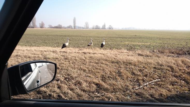 Itt a tavasz? – Már vissza is tértek a gólyák Albárra!